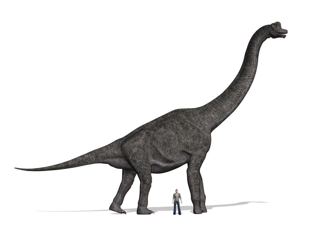 Brachiosaurus: Facts About the Giraffe-like Dinosaur