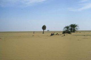 nile-kiseiba-oasis-101207-02