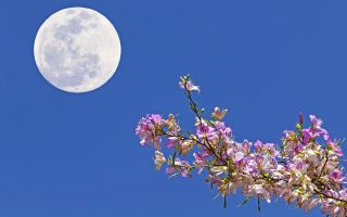 The full Flower Moon will occur on May 7, 2020.