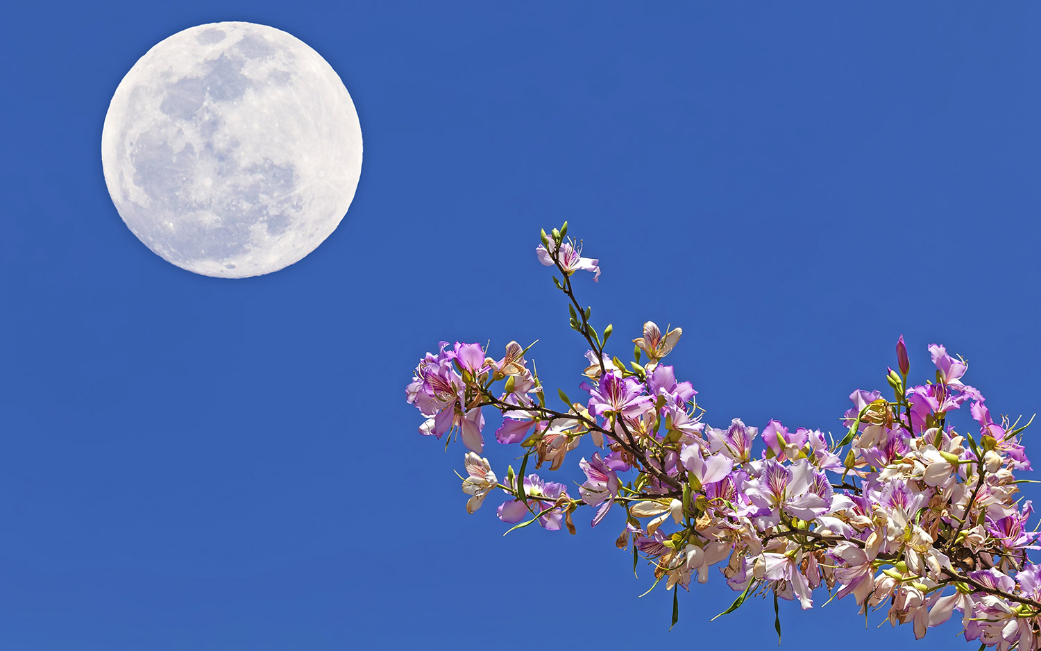 May Full Moon 2019   Space