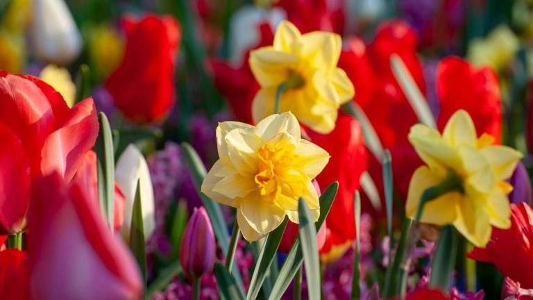 Planting bulbs for colourful spring displays