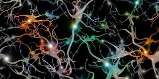Neuron connections in the brain