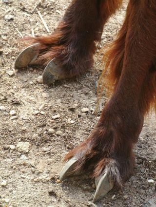 strange animal feet, alpaca feet, weird animals, alpacas, animal photos, andes animals, alpaca information