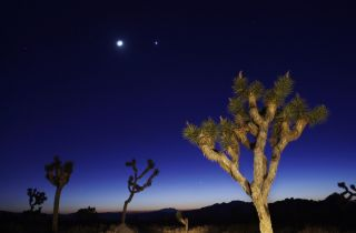 The moon and Venus shine above Joshua Tree National Park