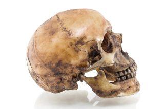 skull, human skull, bone, skeleton