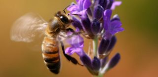 Vertical bee-landing on a flower