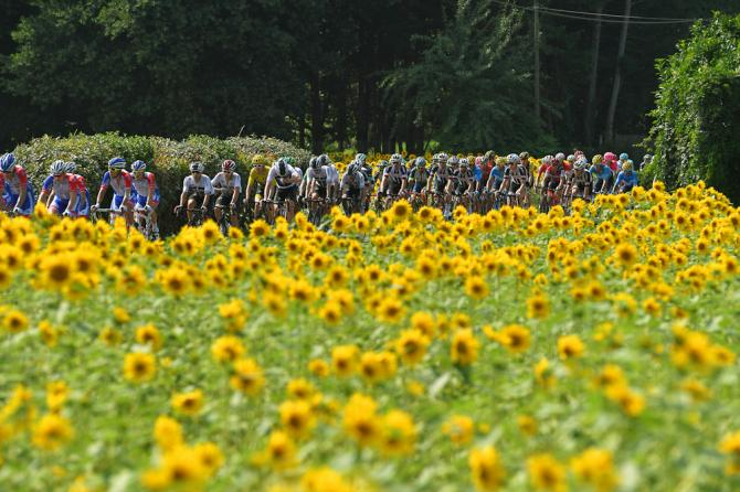 Sunflowers along the route of stage 18 at the Tour de France
