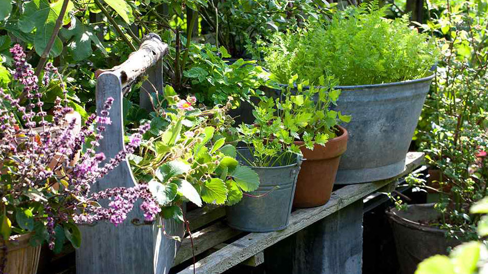Container Gardening For Small Es Real Homes