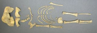 Skeleton of an infant found at Hambleden