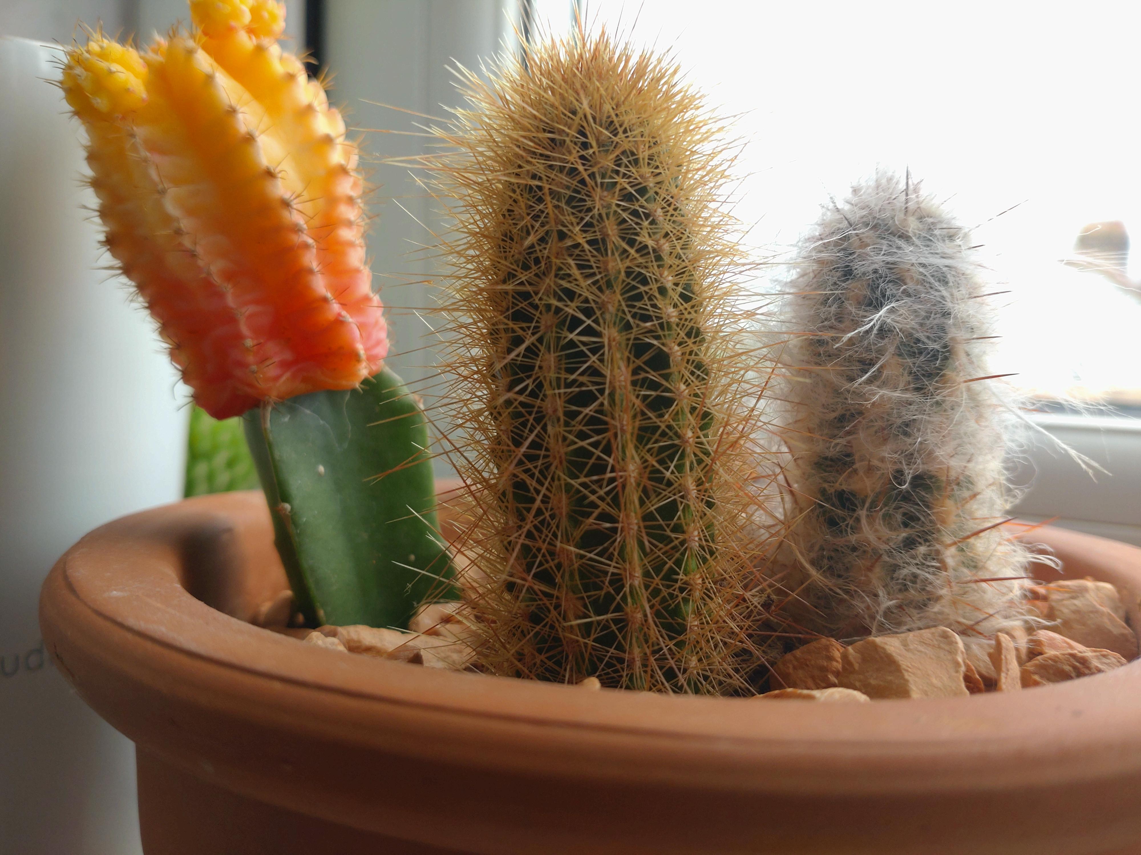 A cactus shot on the Xperia 10 III
