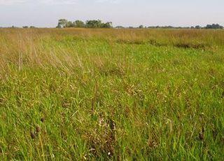 coastal-prairie-wetland-110308-02