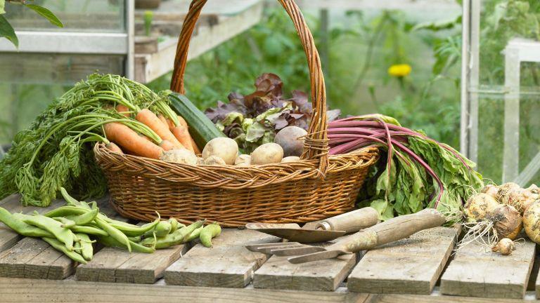 basket of home-grown vegetables