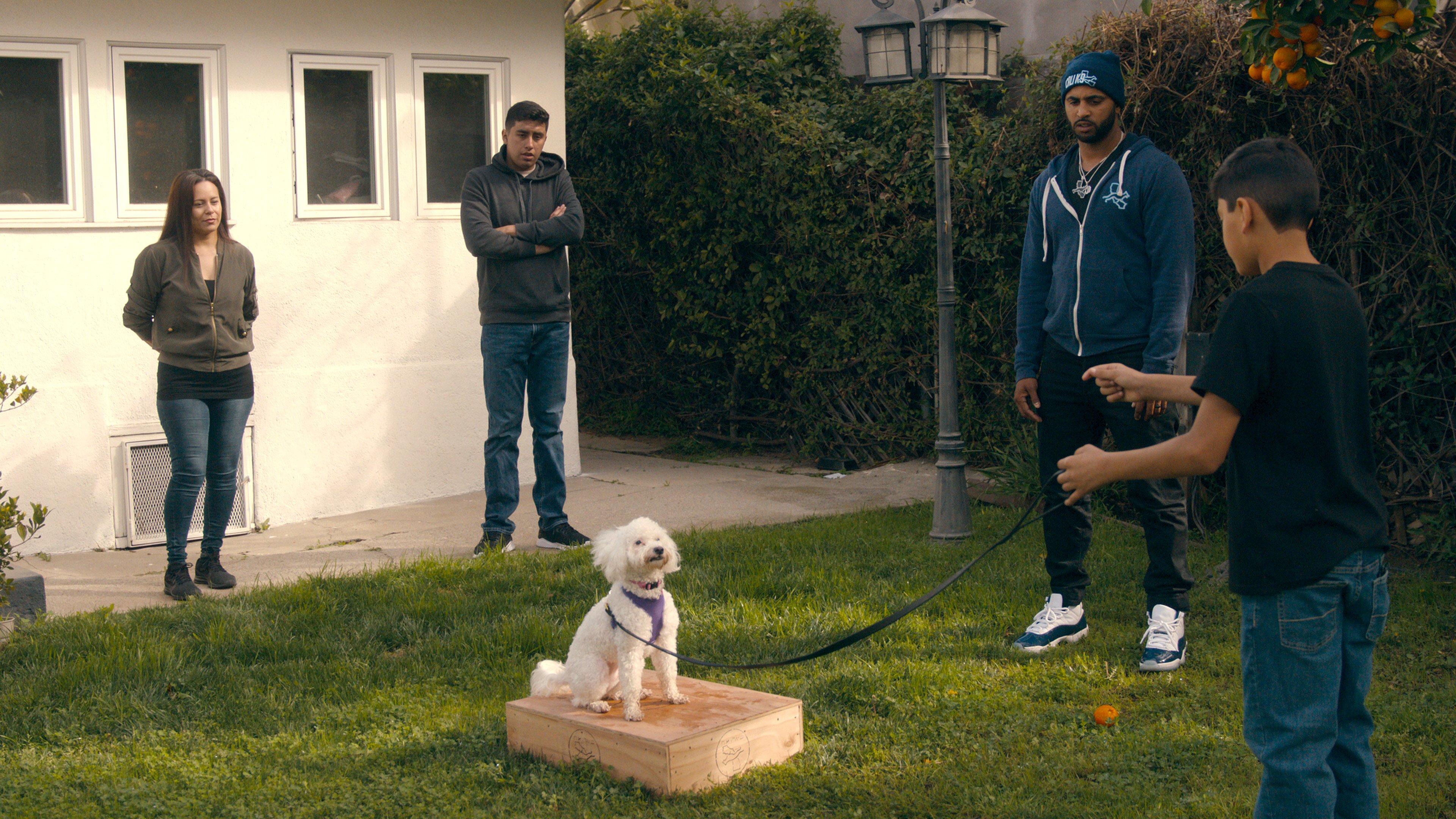 Canine Intervention Netflix