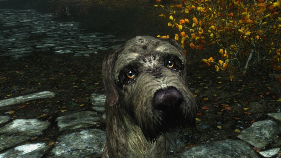 Turns out adopting a dog in Skyrim is the hardest quest in the game