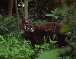 saola-forest-110413-02
