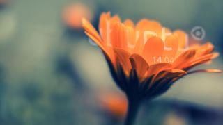 Ubuntu 14.04 Trusy Tahr