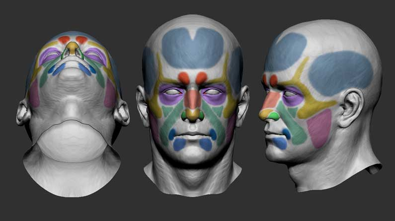 10 anatomy tips for 3D artists | Creative Bloq