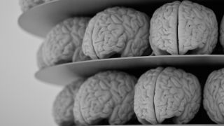 Brains_CreditNeilConway