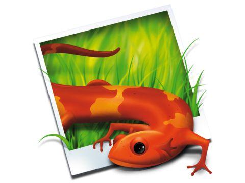 Shiny Frog Img2icns
