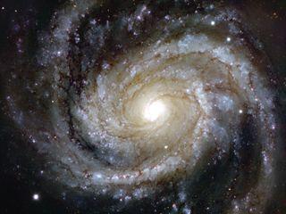Messier 100 Spiral Galaxy