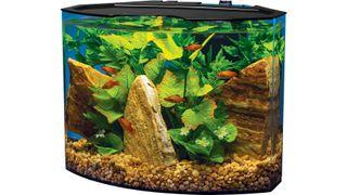 best small fish tank