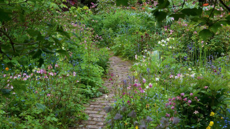 garden path needing maintenance