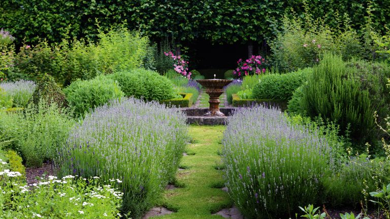 Lavender in a garden border either side of a water feature