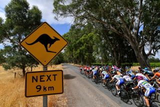 MACCLESFIELD AUSTRALIA JANUARY 16 Kangaroo Signal Peloton Landscape during the 6th Santos Womens Tour Down Under 2020 Stage 1 a 1163km Stage from Hahndorf to Macclesfield tourdownunder UCIWT TDU on January 16 2020 in Macclesfield Australia Photo by Tim de WaeleGetty Images