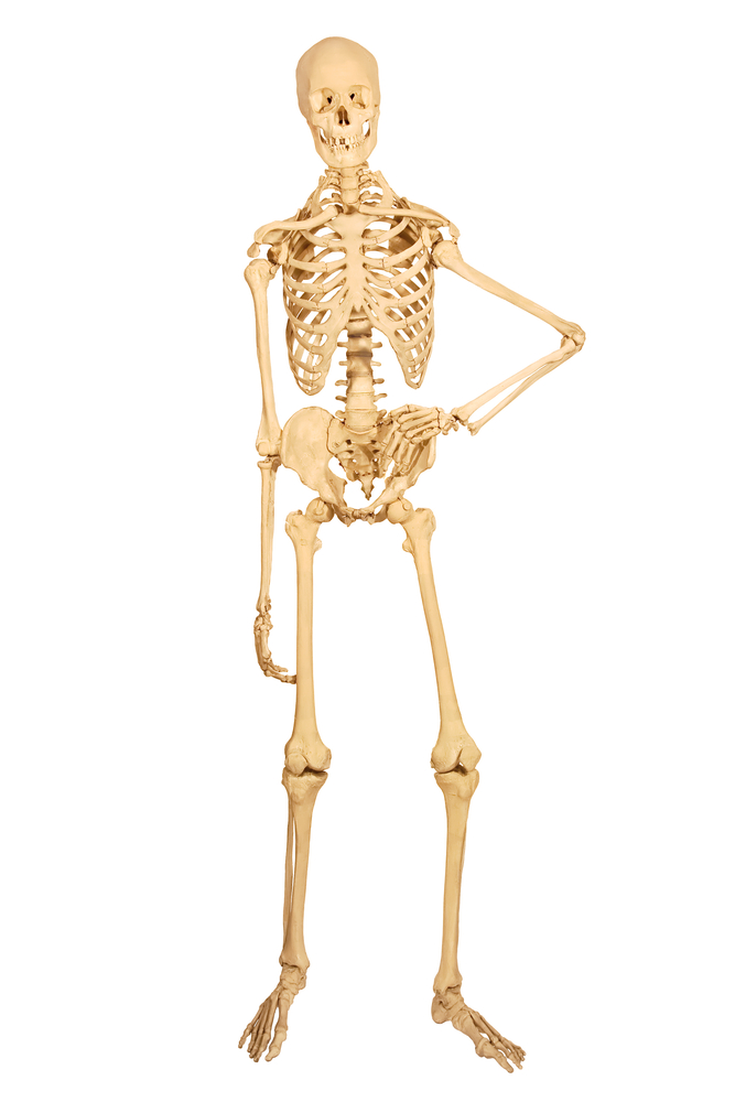 11 Surprising Facts About The Skeletal System Live Science