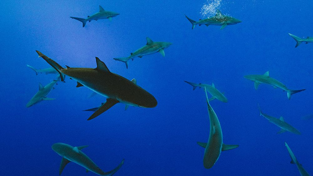 How sharks and camels could be the keys to curing brain diseases