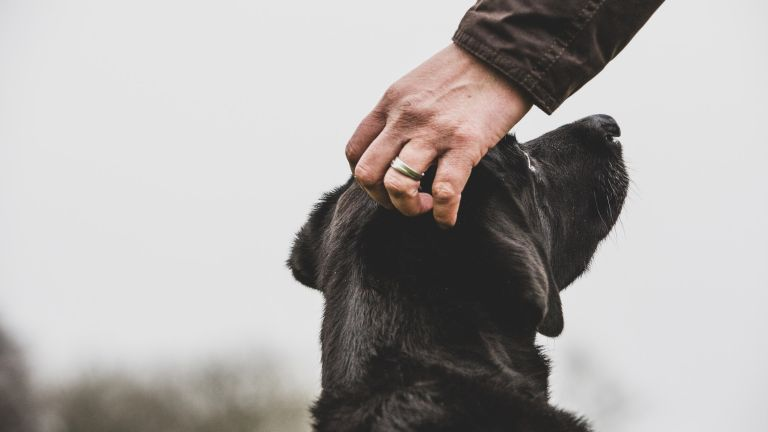 dog being petted by owner
