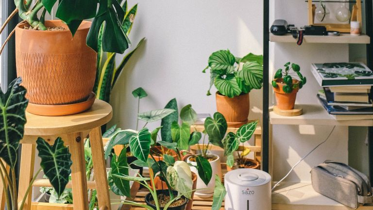 A room full of house plants