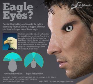 Credit: Karl Tate (infographic), 5607594264 | Shutterstock (man)