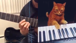 Piano cat accompanying his human on the keyboards