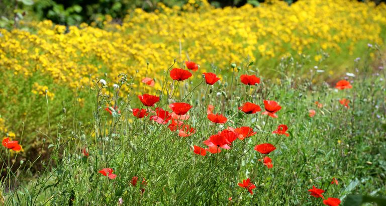How-to-identify-wildflowers-FEATURED