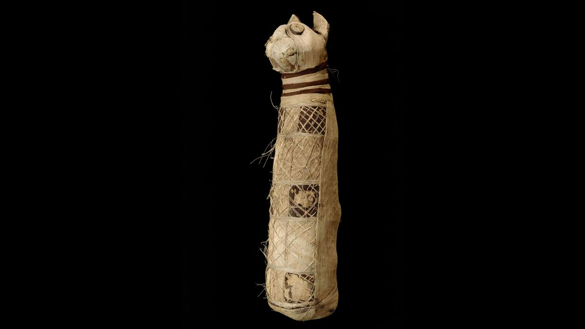 Inside Ancient Egyptian Cat Mummy, Archaeologists Find the Remains of 3 Cats