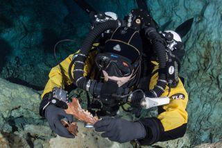 Diver holds canid skull