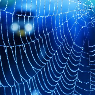 spider web and car
