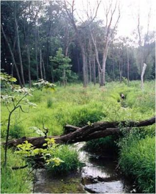 wetlands, flooding, water