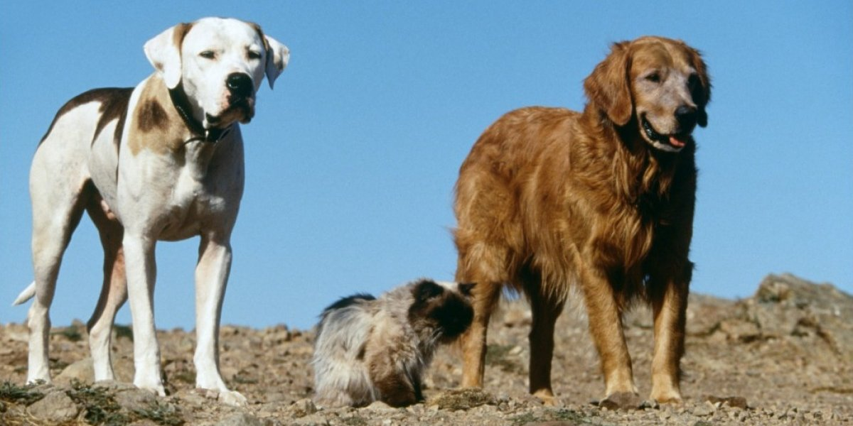 Michael J. Fox, Sally Field, and Don Ameche in Homeward Bound: The Incredible Journey