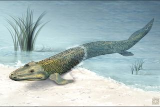tiktaalik roseae, fish, swimming, walking, evolution, hind fins