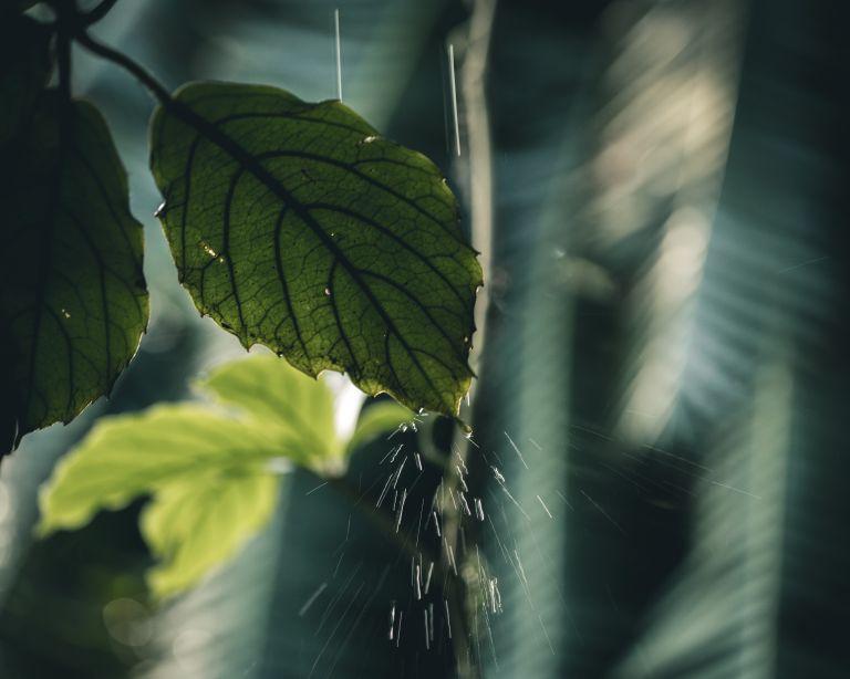 Rainwater harvesting - garden leaf