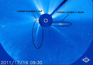 comet lovejoy head tail