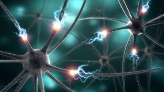 Brain Synapse