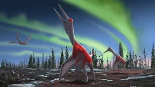 The giant pterosaur Cryodrakon boreas stands before a sky illuminated by the aurora borealis. It lived during the Cretaceous period in what is now Canada.