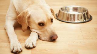 sunshine mills dog food recall: dog empty dish