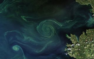 Algae bloom swirls.