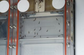 Ant Experiment on the International Space Station