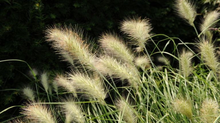 Monty Don's ornamental grass garden ideas