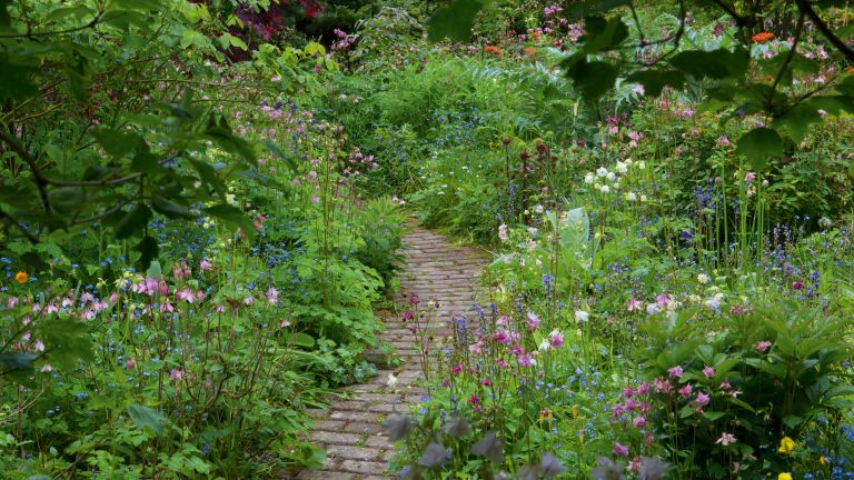 Garden Path Between Flower Borders